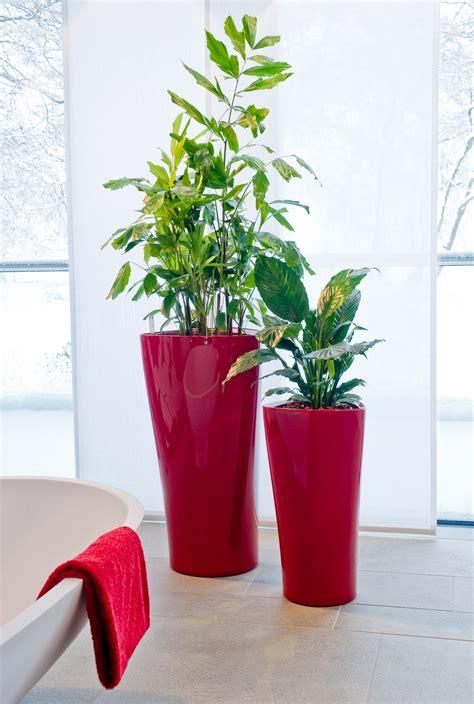 Grünpflanzen In Dekorativen Xxl-gefäßen