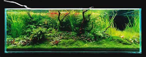 aquascape amano takashi amano s 180x60x60cm triangular driftwood aquascape