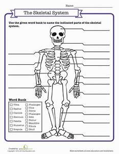 Skeletal System Quiz   Worksheets, Life science and School ...