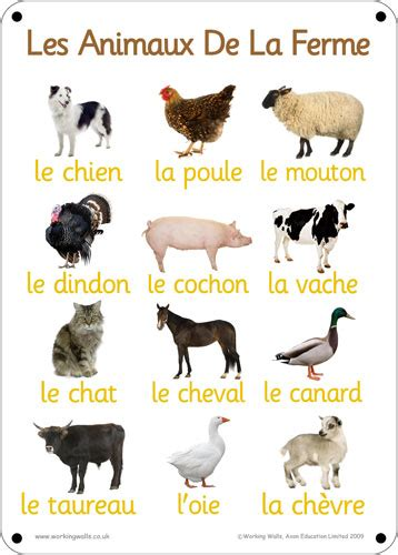 pronunciation  french animal vocabulary words french