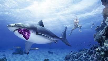 Shark Funny Mystery