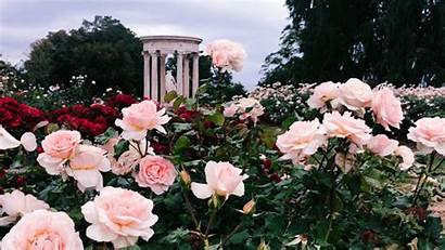 Aesthetic Rose Flowers Flower Animated Huntington Library