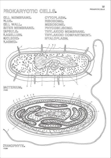 biology coloring book harpercollins  rainbow