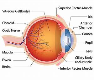 Study  Steroid Shows Potential For Treating Cataracts Without Surgery