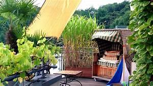 Garten Sichtschutz Pflanzen : sichtschutz auf dem balkon durch pflanzen ratgeber garten ~ Watch28wear.com Haus und Dekorationen