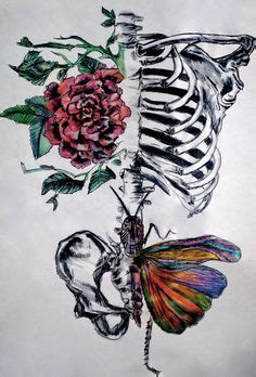 Rib Cage Pelvis With Flower Butterfly Art Skeleton