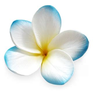 blue flower touch l sky blue real touch frangipani flower head