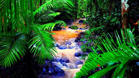 Rainforest Animals Wallpaper - tropical rainforest wallpaper 183