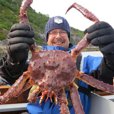 king crab expedition hurtigruten uk