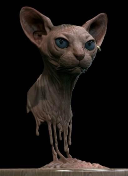 Sphynx Cat Schrott Gemerkt Uploaded Curse Keates