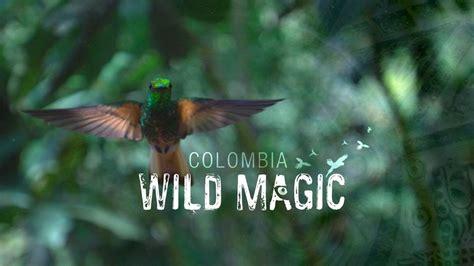 wild magic colombia netflix wildlife documentaries movie dangerous times holey moley graphics
