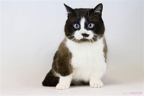 Plan Du Site  Chatterie Teacupcats  Teacupcats Cattery