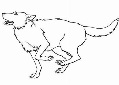 Coloring Wolf Realistic Printable