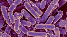 The bacteria in your gut may reveal your true age ...