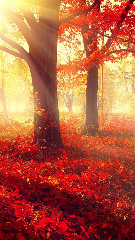 Autumn Wallpapers 4k by Wallpaper Park 5k 4k Wallpaper Autumn Beautiful