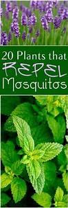 25  B U00e4sta Id U00e9erna Om Repel Mosquitos P U00e5 Pinterest