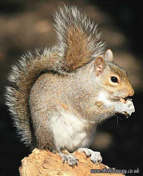 ecureuil en images dinosoria