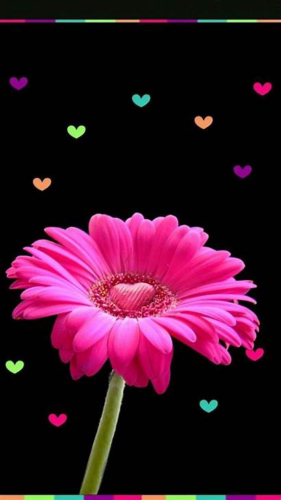 Pink Flower Animal Backgrounds Phone Nature Flowers