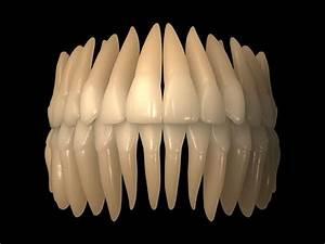 3d Human Skull Teeth