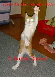 Crazy Funny Cat Dancing