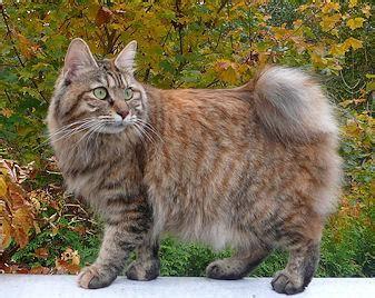 kaķi - Spoki - bildes 4