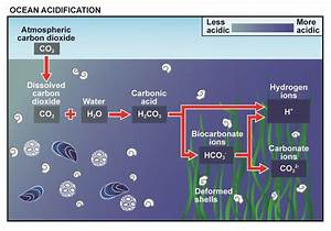Schematic Diagram Of Ocean Acidification The Reaction