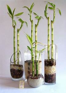 Bambús de la suerte Natural branding PLANTAS Pinterest Natural, Tes and Branding