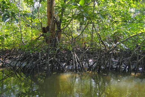 Mangrovesandamans