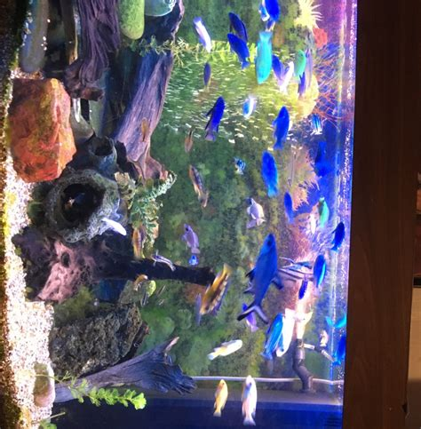 juwel vision 260 fish tank aquarium tropical fish site