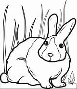 Bunny Coloring Pages Rabbit Easter Printable Colouring Children Supplyme Read Colors Getdrawings sketch template
