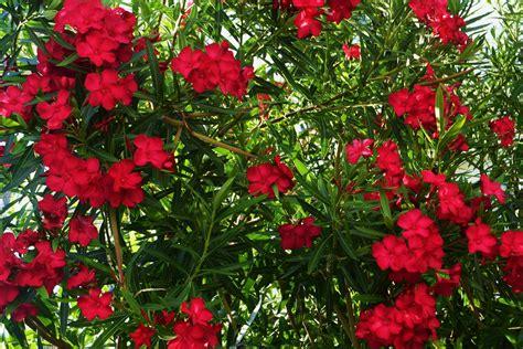 american homestead flora  fauna mexico