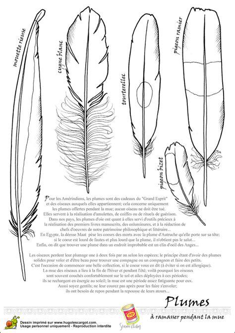 plume d oiseau dessin diff 233 rentes plumes d oiseaux 224 colorier coloriages d