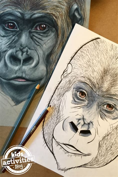 gorilla coloring pages  kids