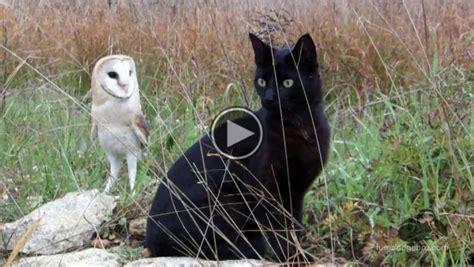 owl  cat   friends    cutest