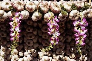 Planter Ail Rose : conseils astuces du mois de mars pour jardiniers tendances le blog jardinchic ~ Nature-et-papiers.com Idées de Décoration