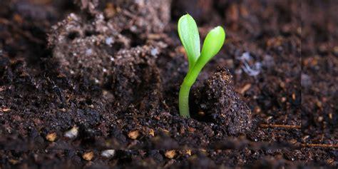 alzhaimer tuin een gezonde bodem in uw tuin h w hoveniers