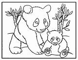 Panda Coloring Pages Pandas Baby Bear Printable Cute Momma Colour Sheet Bears Template Mom Pandacorn Animals Children Babies Animal Activity sketch template