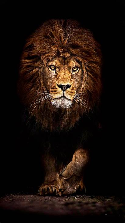 Lion Cool Wallpapers Iphone