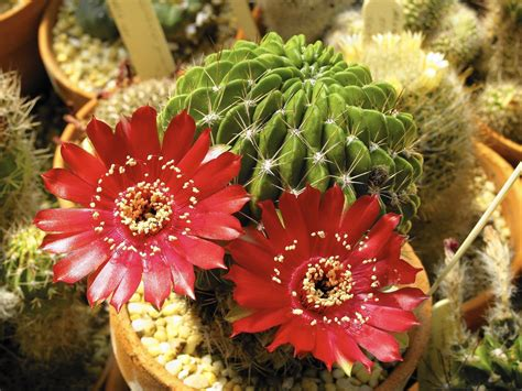 Growing succulents: Expert shares tips for cultivating ...