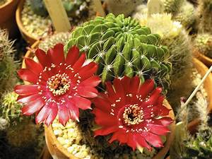 Growing Succulents  Expert Shares Tips For Cultivating