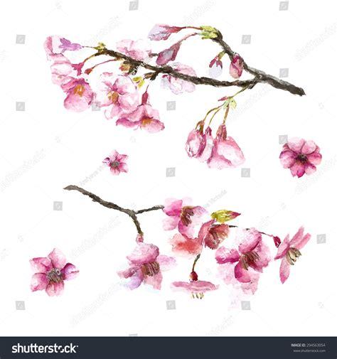 Watercolor Cherry Blossom Hand Draw Cherry Stock Vector