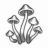 Mushroom Mushrooms Magic Drawing Vector Illustration Clip Clipart Cute Monochrome Lsd Psilocybe Psychedelic Illustrations Psilocybin Doodle Cut Icon Weird sketch template