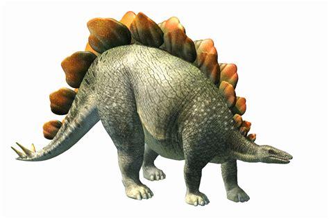 Stegosaurus Bony Plates Tiny Brain