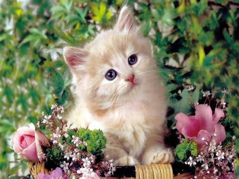 hqhdd cute cats hd wallpapers