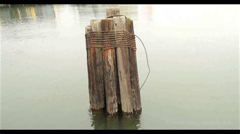bundled wood in water 4K - YouTube