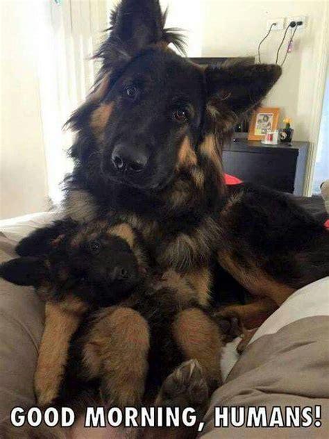 funny dog  puppy staring  camera luvbat