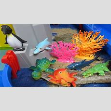 Learn Sea Animals Names Ocean Animal Swimming Pool Surprise Toy Videos For Kids Finding Dory