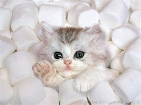 chats trop mignons images