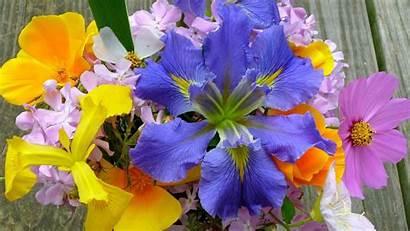 Spring Flowers Desktop Widescreen Flower Background Computer