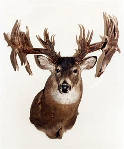 20 Biggest Non-Typical Bucks of All Time - Petersen's Hunting